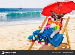 depositphotos_152229280-stock-photo-dog-siesta-on-beach-chair.jpg